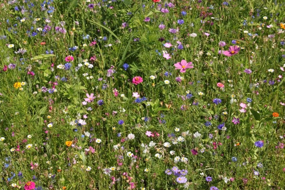 Belladauree_fleurs